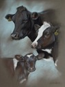 3 generations of dairy cows